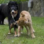 hunde01