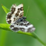 schmetterling02fin1